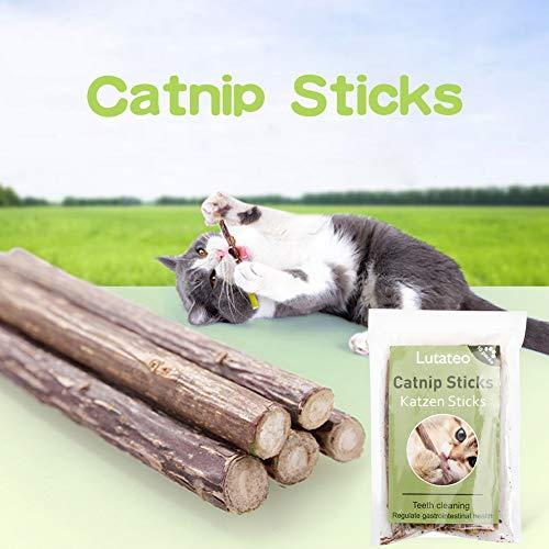 Lutateo Katzenminze Katzenspielzeug, Katze Dental Chew Sticks, Katze Spielzeug 10 Sticks von Pack, Unterstützen Eine Natürliche Zahnpflege und Helfen Bei Mundgeruch und Zahnstein - 4
