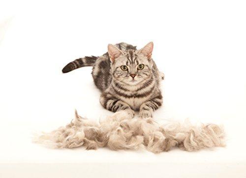 FURminator deShedding Tool für Katzen – Katzenfellbürste in Größe S zur gründlichen Entfernung von losen Haaren sowie Reduzierung von Haarballen - für kurzhaarige Katzen - 5