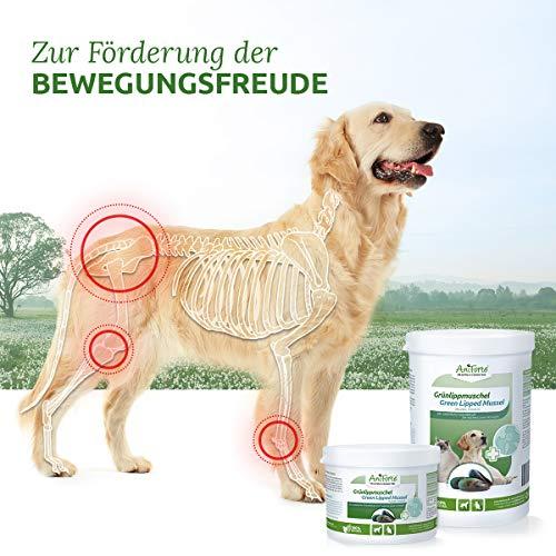 AniForte Grünlippmuschel-Pulver 100g für Hunde und Katzen, Natürliches Gelenk-Pulver in Vollfett Qualität, Unterstützt Gelenke & Gelenkfunktion, Reines Grünlippmuschel-Extrakt, Ohne Zusätze - 5