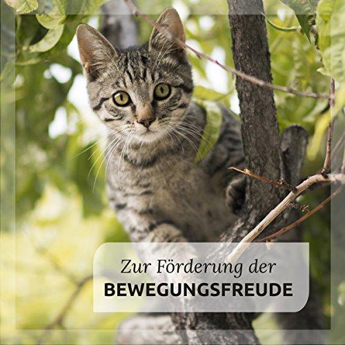 AniForte Gelenk-Schild 250g für Katzen und Hunde, Bewegung Komplex, Unterstützung Gelenke, Mobilität und Vitaltität, Natur Pur, Bierhefe Grünlippmuschel-Pulver, Teufelskralle, Ginkgo und Collagen - 5