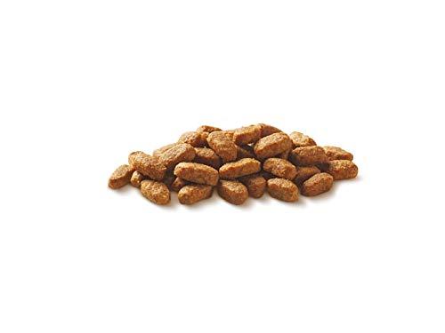 Purina ONE BIFENSIS Senior 7+ Katzentrockenfutter: reich an Huhn & Vollkorn-Getreide, unterstützt Vitalfunktionen I ab 7 Jahre I 6er Pack (6 x 800 g) - 5
