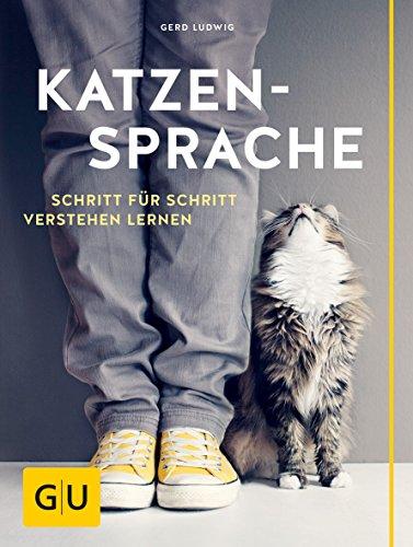 Katzensprache: Schritt für Schritt verstehen lernen