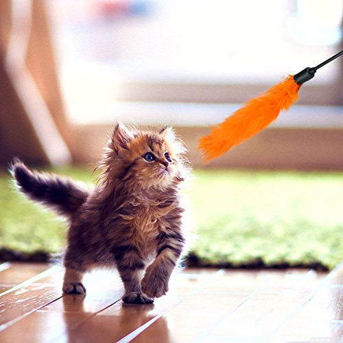 Legendog Katzenspielzeug, interaktives Spielzeug der Katzenminze des Glases kreatives Katzenglas-Fensterbrett-Saugerkatzenspielzeug (20PCS-Katzenspielzeug) - 7
