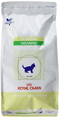 Royal Canin Pediatric Weaning, Trockenfutter für Katzenwelpen