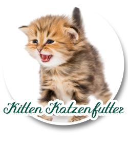 Kitten Katzenfutter