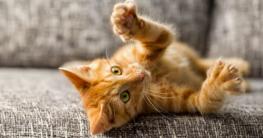 Kratztonne und Kratzbaum fördern die natürlichen Bedürfnisse der Katze