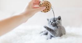 Kittenspielzeug